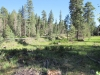 Hannagan Meadow Campground - Hwy 191 / 06-27-2017
