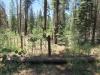 Hannagan Meadow Campground / 06-27-2017