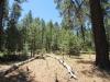 Horseshoe Cienega Lake Campground